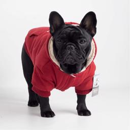 Canada Pooch Cozy Hætte Sweaters Red