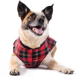 Hunde Fleece GoldPaw Stretch Pullover Red Tartan