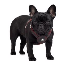 Læder Sele Til Fransk Bulldog Magic Frenchie Model Sort Rød