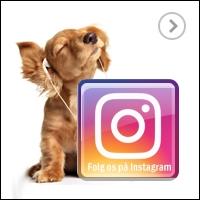 Hundebutik på Instagram